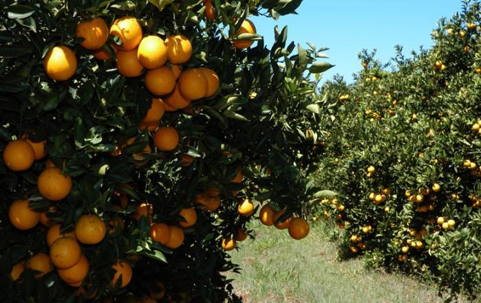 mercado_alimentar_laranjeiras