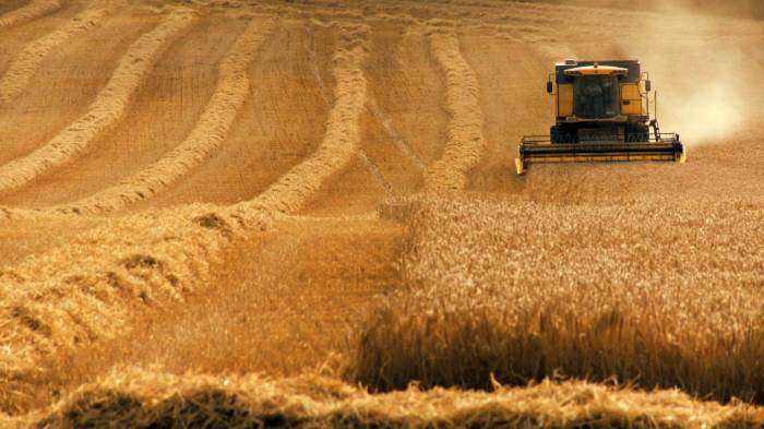mercado_alimentar_pasto agricola