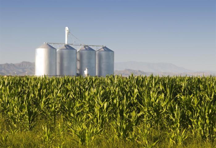 mercado_alimentar_Agribusiness-Large