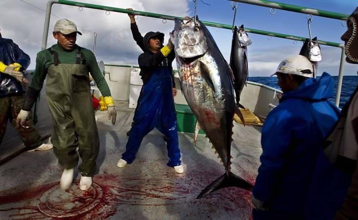 mercado_alimentar_pesca_atum