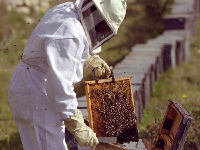 mercado_alimentar_apicultura1
