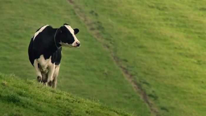 mercado_alimentar_vaca feliz_Terra nostra