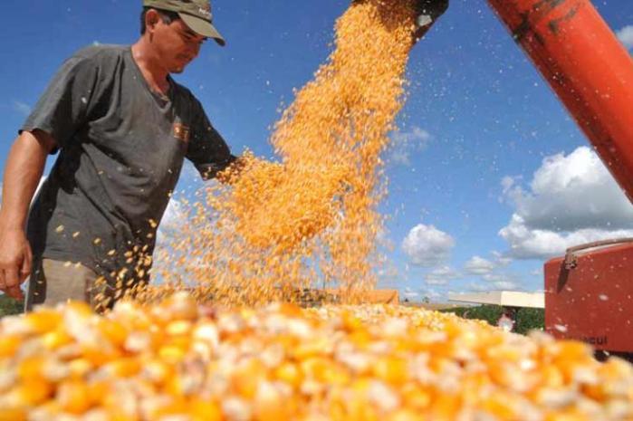 mercado_alimentar_milho-producao