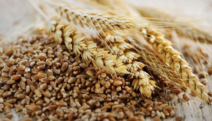 mercado_alimentar_sementes-trigo